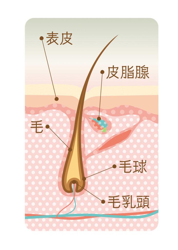 脱毛の原理