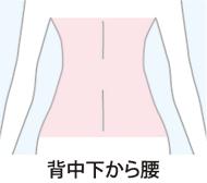 img_LL_senaka_shita